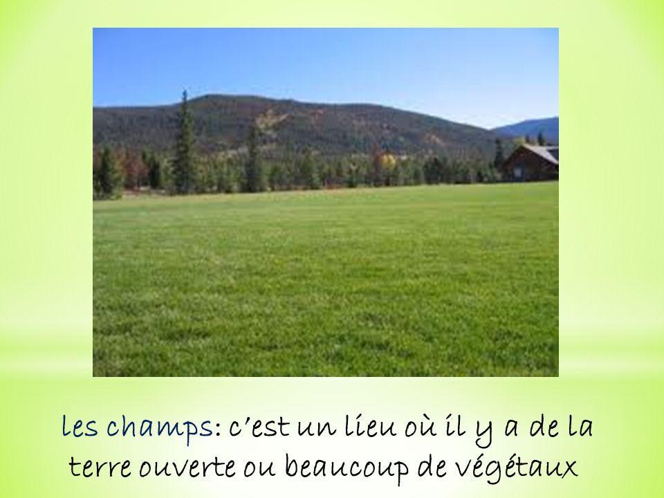 les champs: c'est un lieu où il y a de la terre ouverte ou beaucoup de végétaux