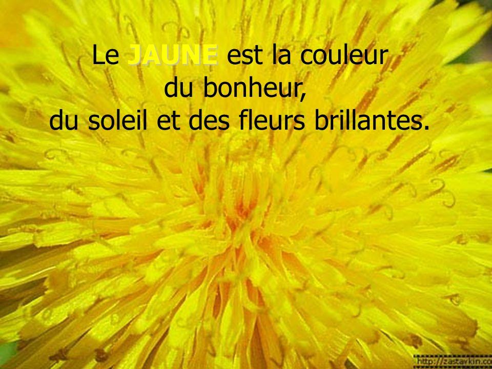 Le JAUNE est la couleur du bonheur, du soleil et des fleurs brillantes.
