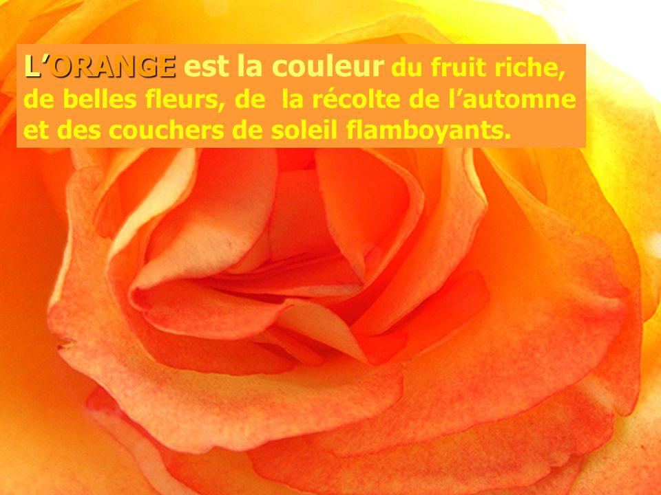 L'ORANGE est la couleur du fruit riche, de belles fleurs, de la récolte de l'automne et des couchers de soleil flamboyants.