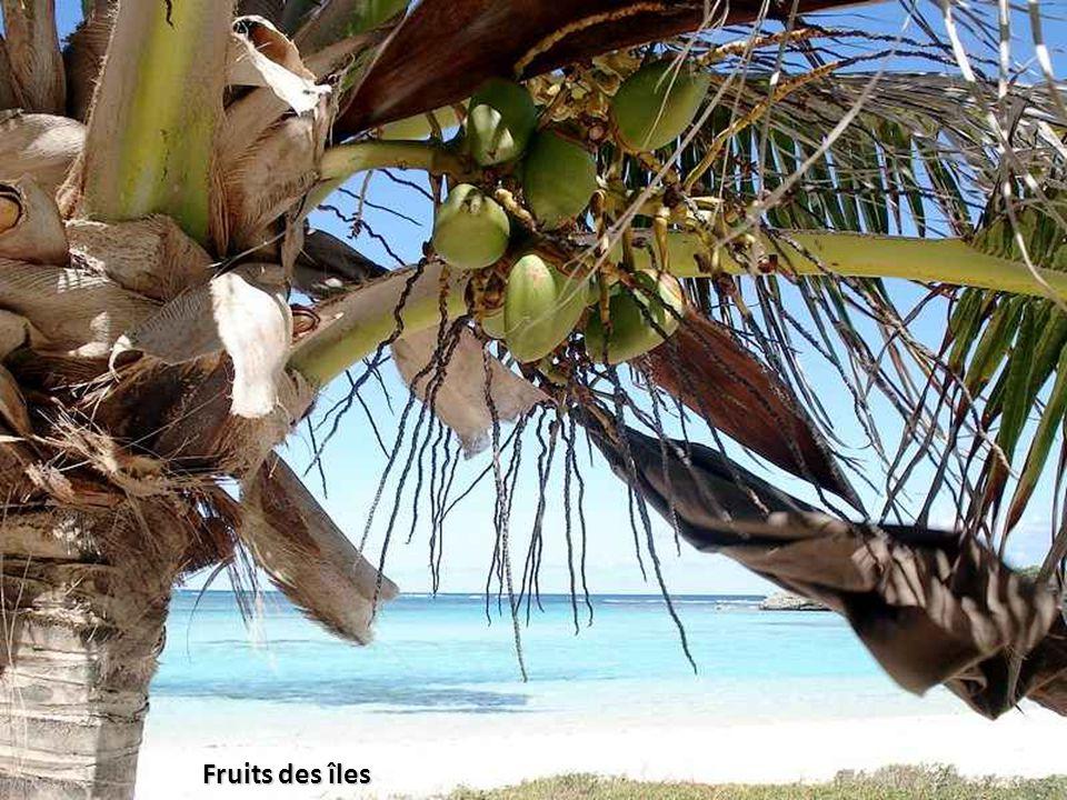 Fruits des îles