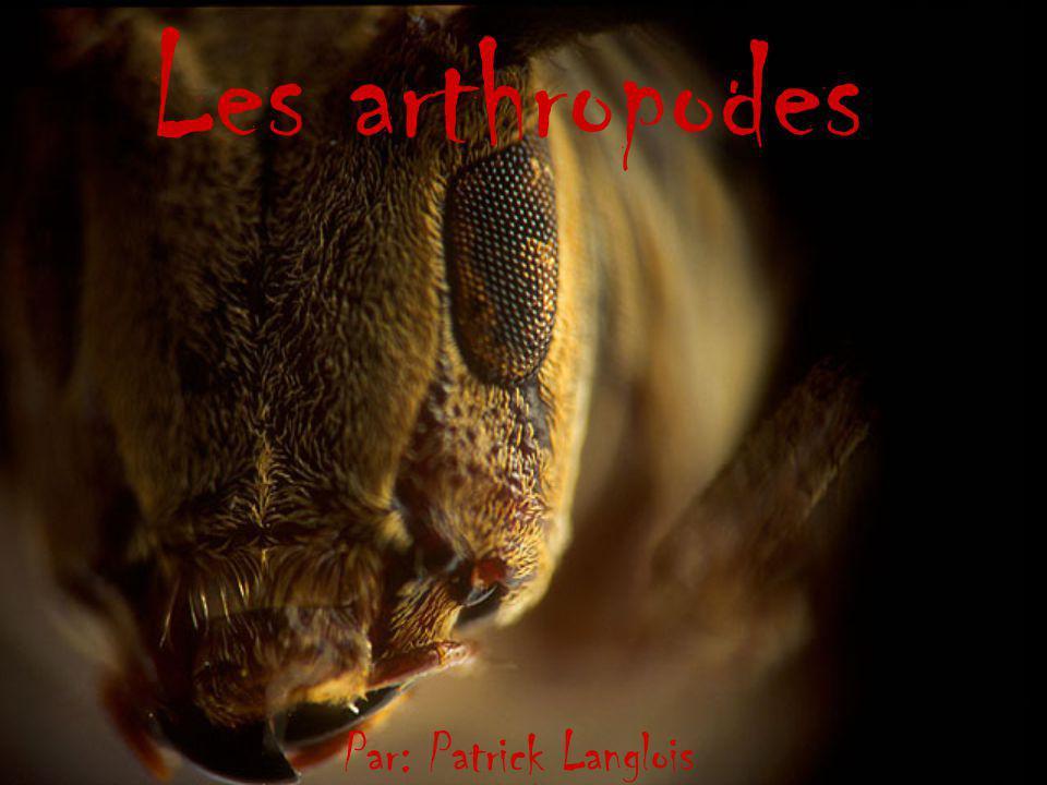 Les arthropodes Par: Patrick Langlois