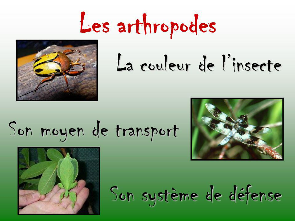 Les arthropodes La couleur de l'insecte Son moyen de transport