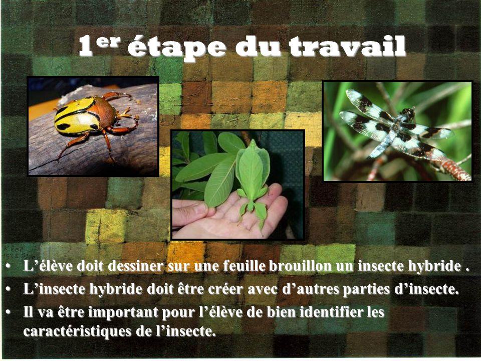 1er étape du travail L'élève doit dessiner sur une feuille brouillon un insecte hybride .