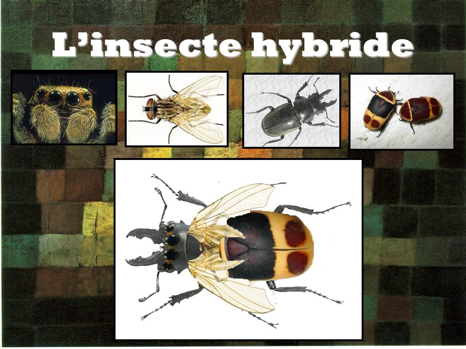 L'insecte hybride