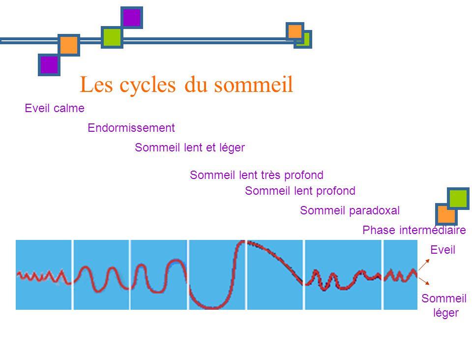 Les cycles du sommeil Eveil calme Endormissement Sommeil lent et léger