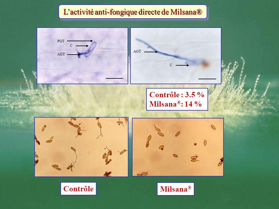 L'activité anti-fongique directe de Milsana®