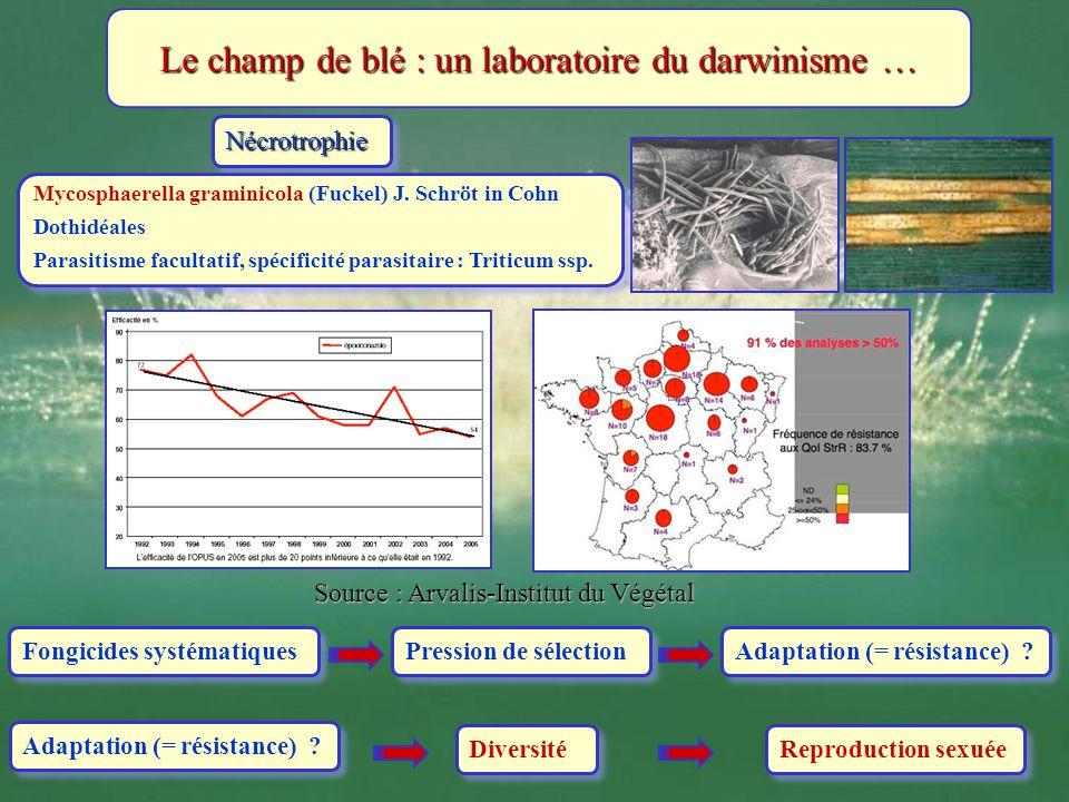 Le champ de blé : un laboratoire du darwinisme …