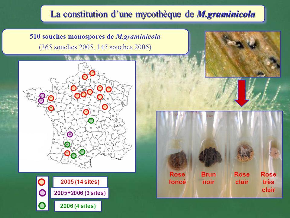 La constitution d'une mycothèque de M.graminicola