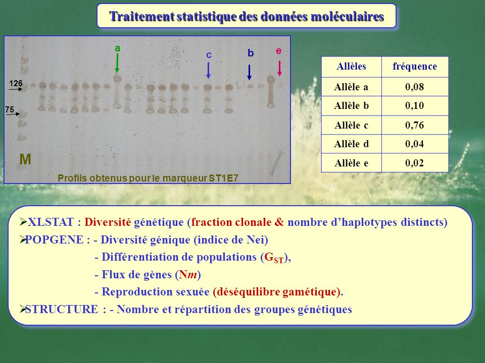 Traitement statistique des données moléculaires