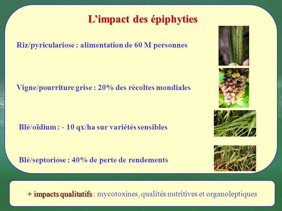 L'impact des épiphyties