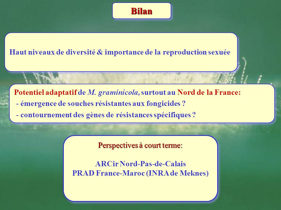ARCir Nord-Pas-de-Calais PRAD France-Maroc (INRA de Meknes)