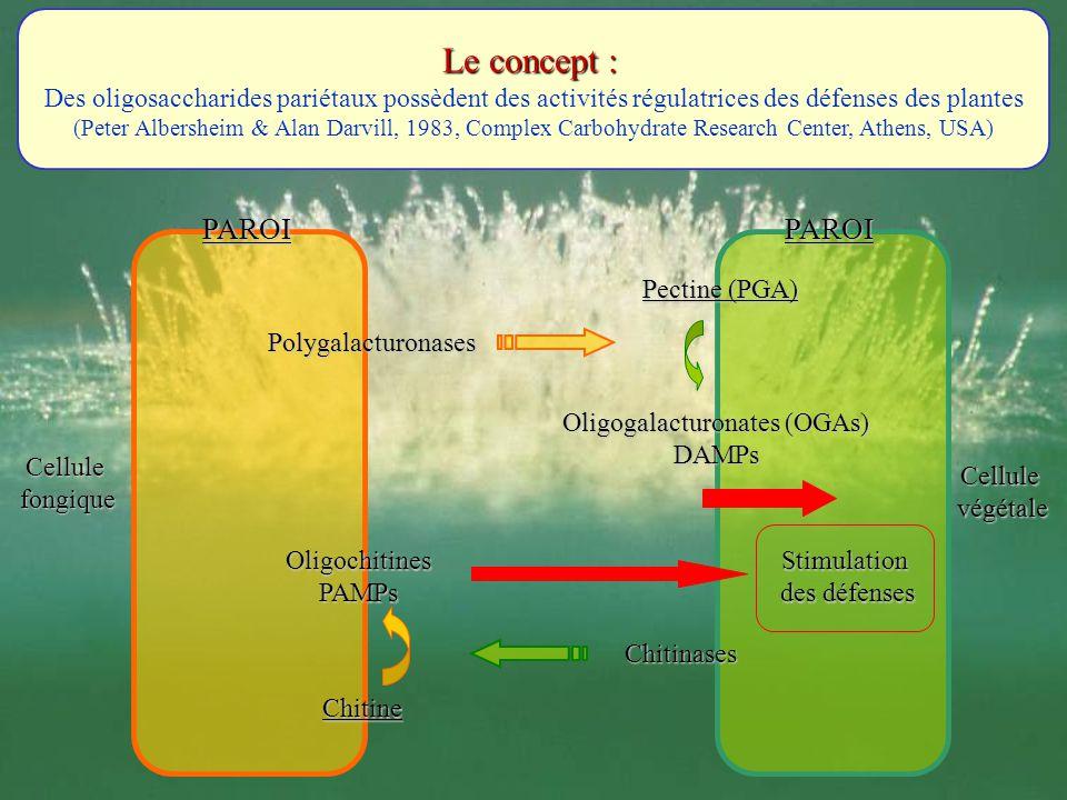 Oligogalacturonates (OGAs)