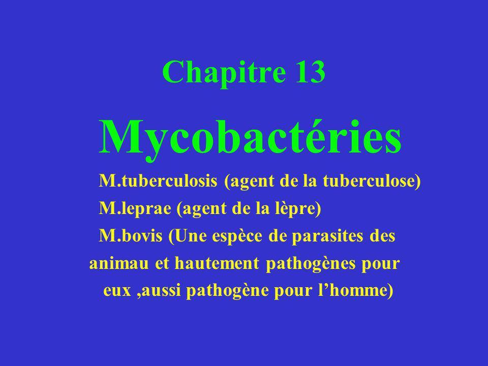 Mycobactéries Chapitre 13 M.leprae (agent de la lèpre)