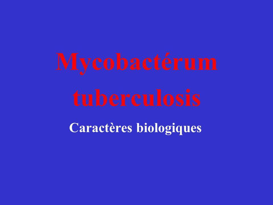 Mycobactérum tuberculosis