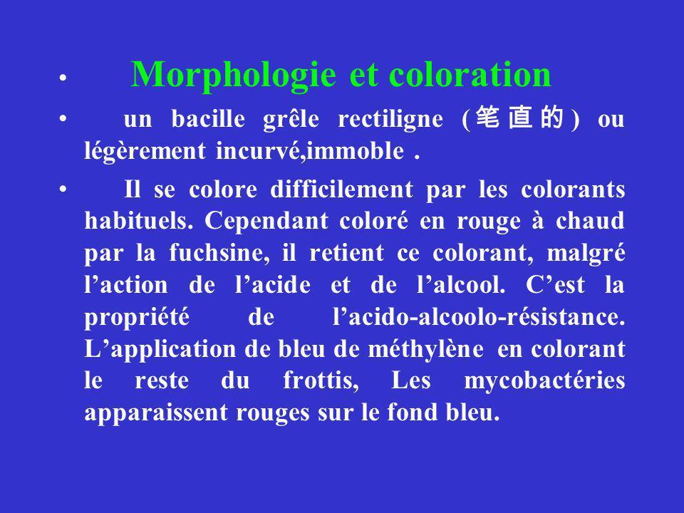 Morphologie et coloration