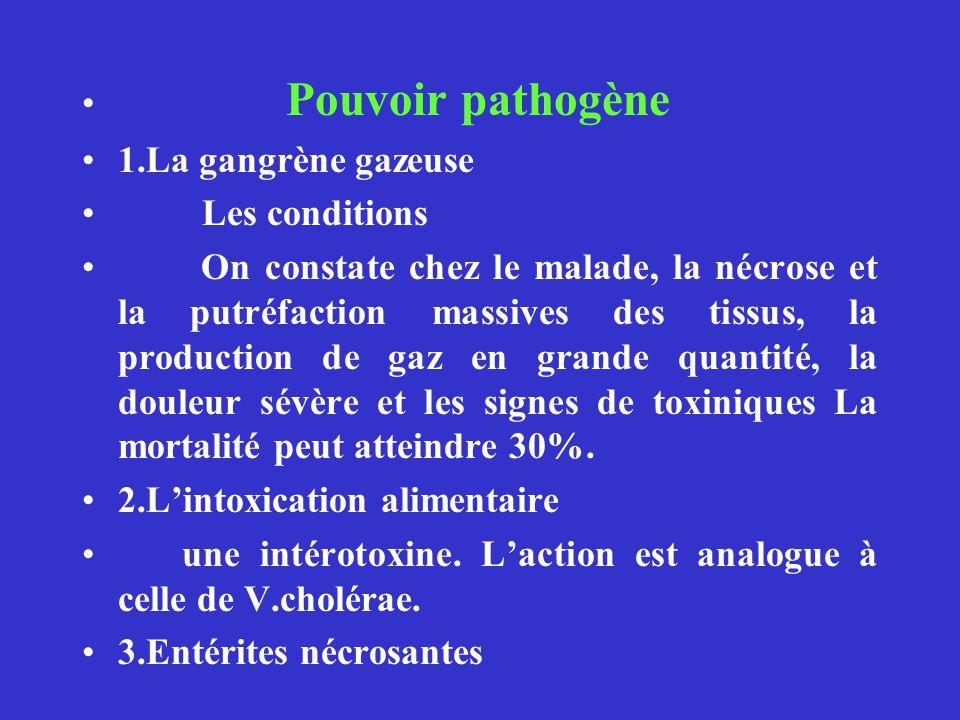 Pouvoir pathogène 1.La gangrène gazeuse. Les conditions.