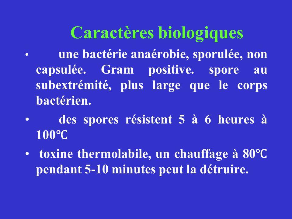 des spores résistent 5 à 6 heures à 100℃