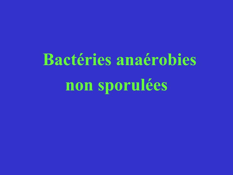 Bactéries anaérobies non sporulées