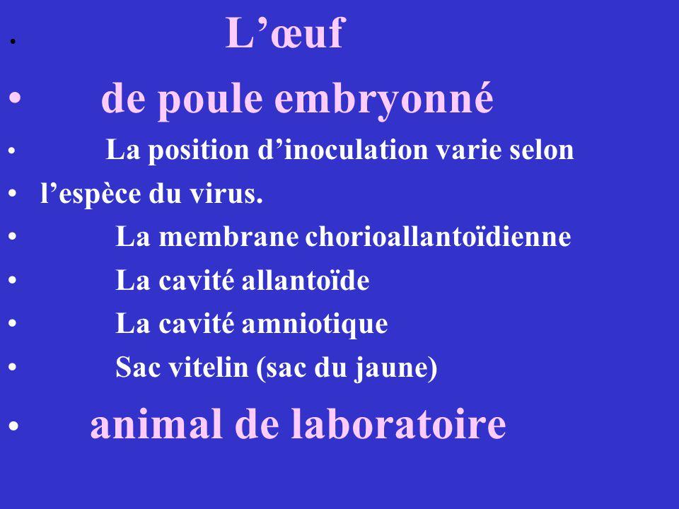 de poule embryonné animal de laboratoire l'espèce du virus.
