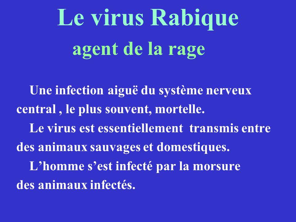 Le virus Rabique Une infection aiguë du système nerveux