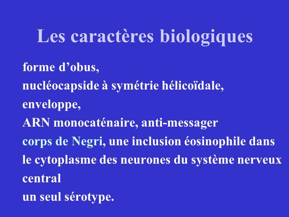 Les caractères biologiques