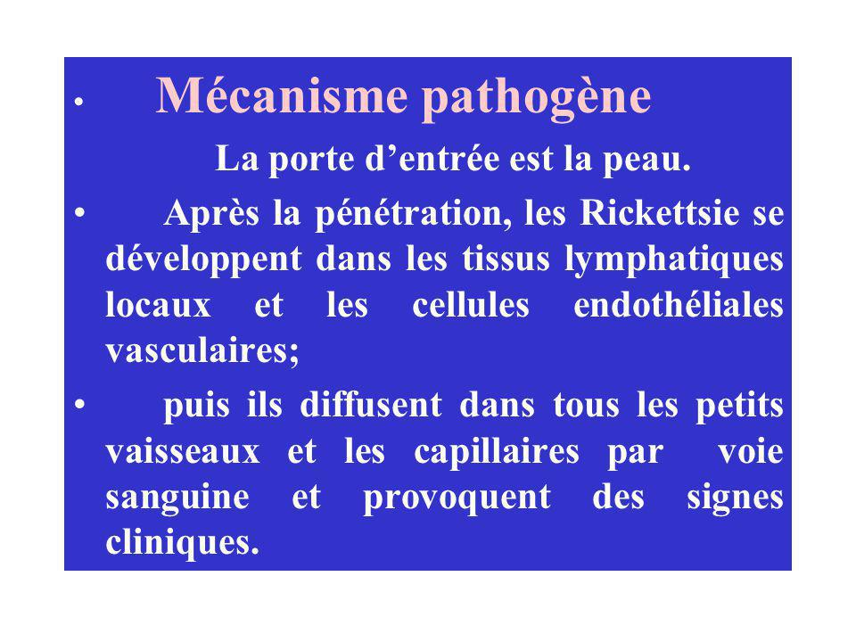 Mécanisme pathogène La porte d'entrée est la peau.