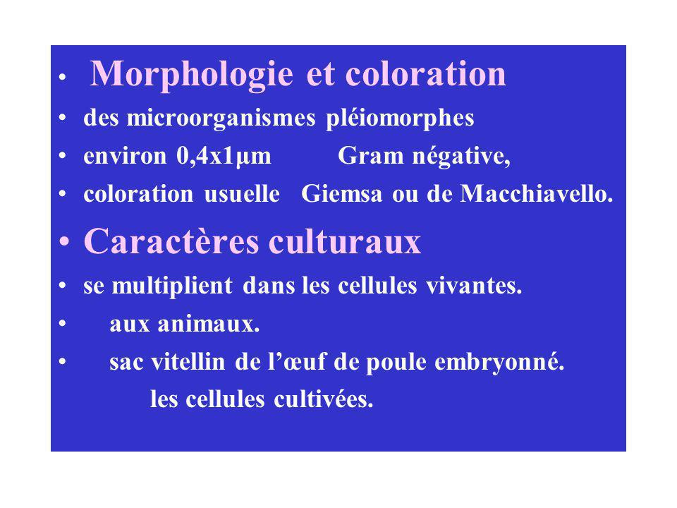 Caractères culturaux Morphologie et coloration