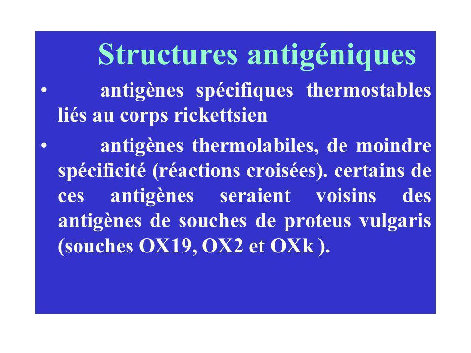 Structures antigéniques