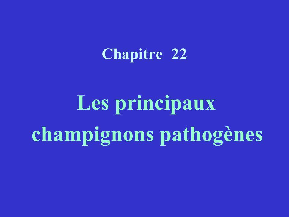 champignons pathogènes