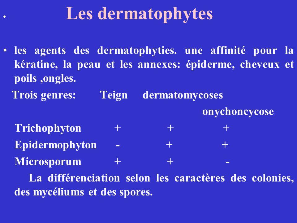 Trois genres: Teign dermatomycoses onychoncycose Trichophyton + + +