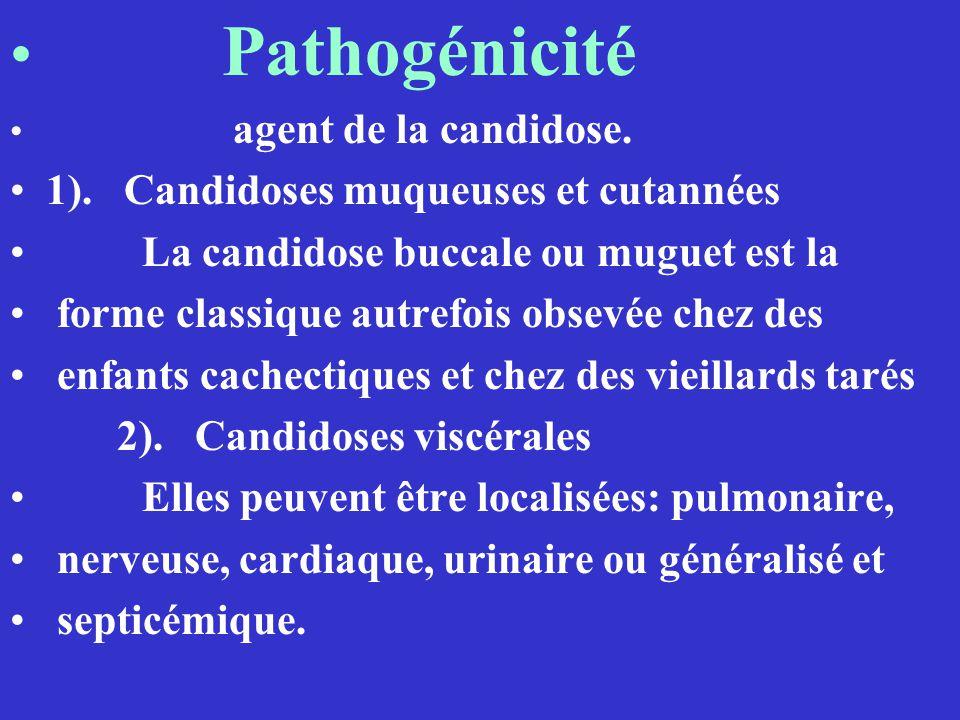 Pathogénicité 1). Candidoses muqueuses et cutannées