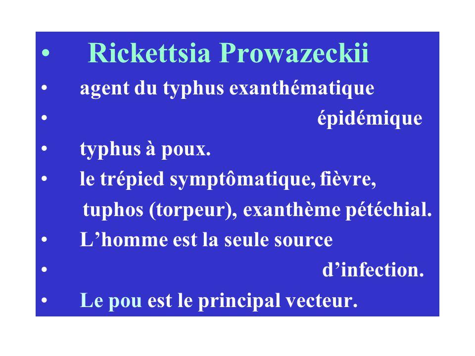 Rickettsia Prowazeckii