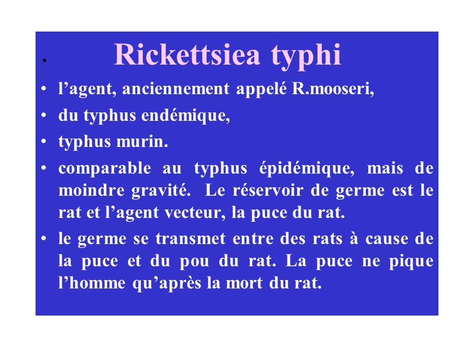 l'agent, anciennement appelé R.mooseri, du typhus endémique,