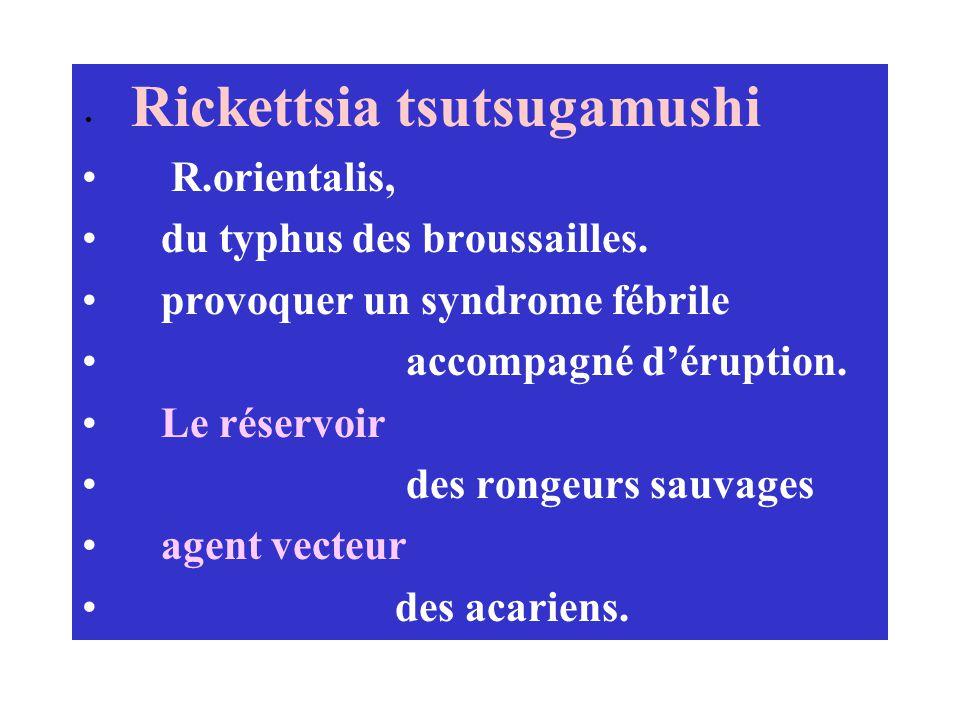 du typhus des broussailles. provoquer un syndrome fébrile