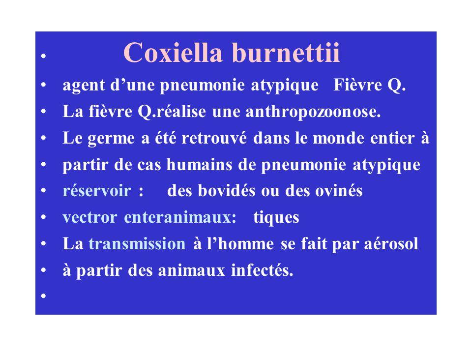 Coxiella burnettii agent d'une pneumonie atypique Fièvre Q. La fièvre Q.réalise une anthropozoonose.