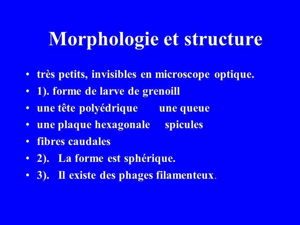 Morphologie et structure