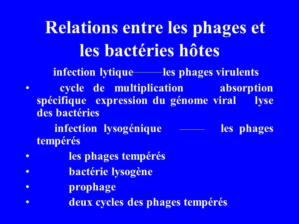 Relations entre les phages et les bactéries hôtes