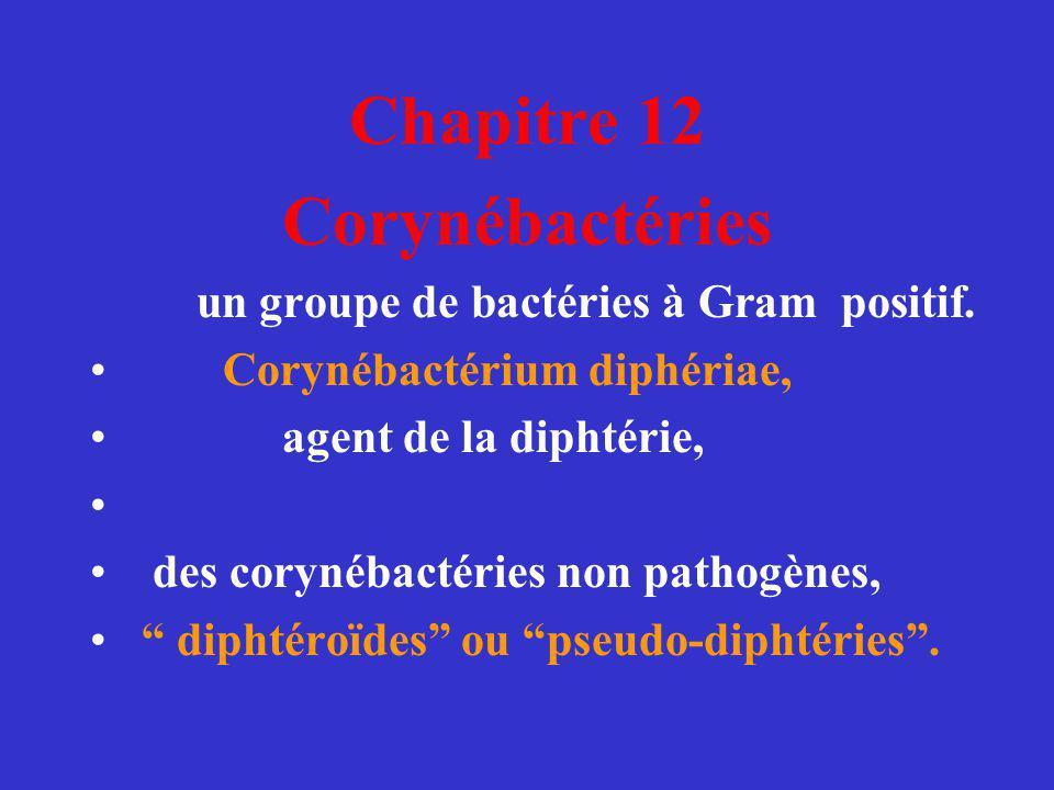 Chapitre 12 Corynébactéries