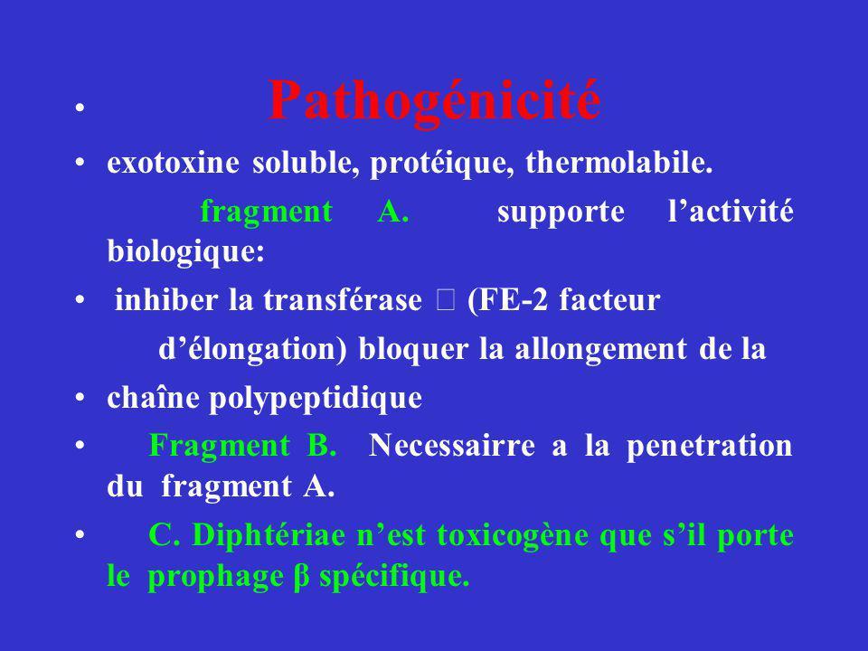 exotoxine soluble, protéique, thermolabile.