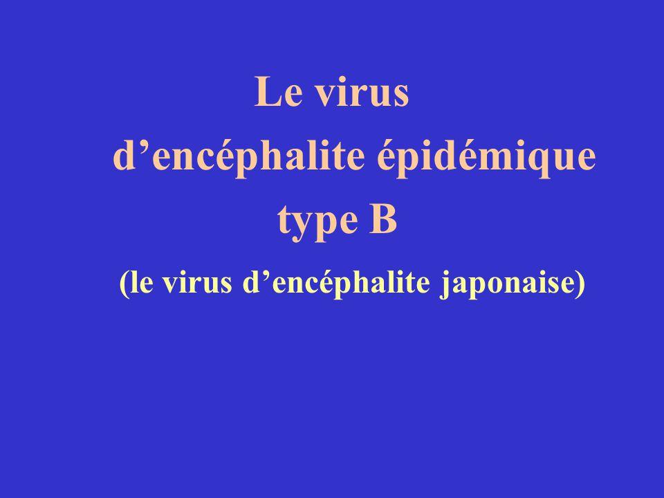 d'encéphalite épidémique (le virus d'encéphalite japonaise)