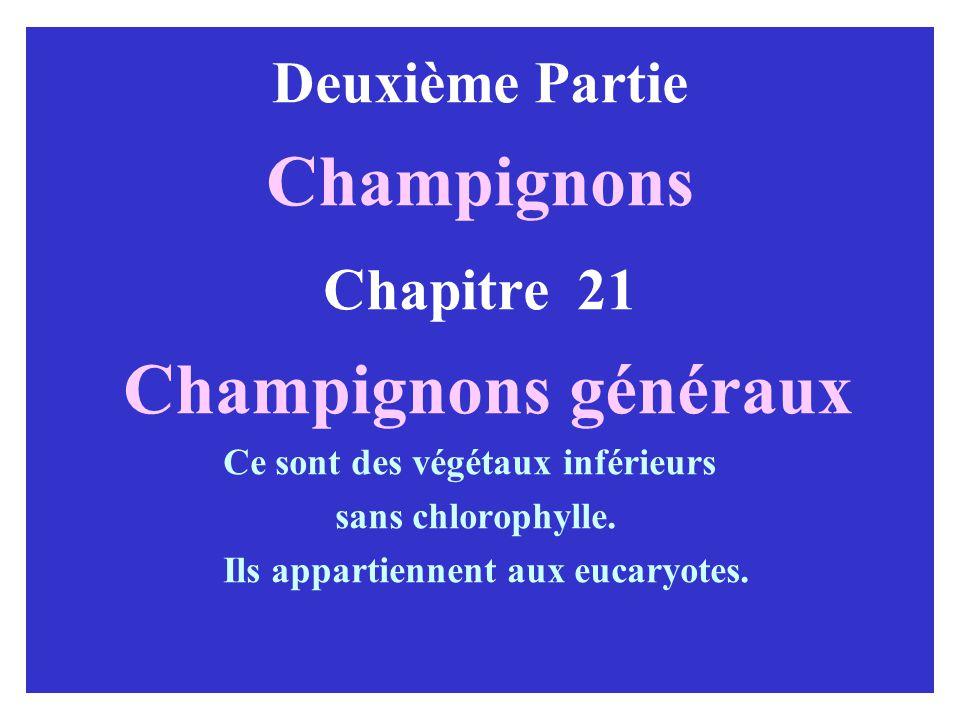 Champignons Champignons généraux