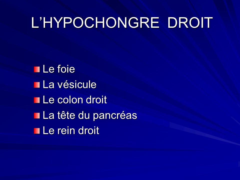 L'HYPOCHONGRE DROIT Le foie La vésicule Le colon droit