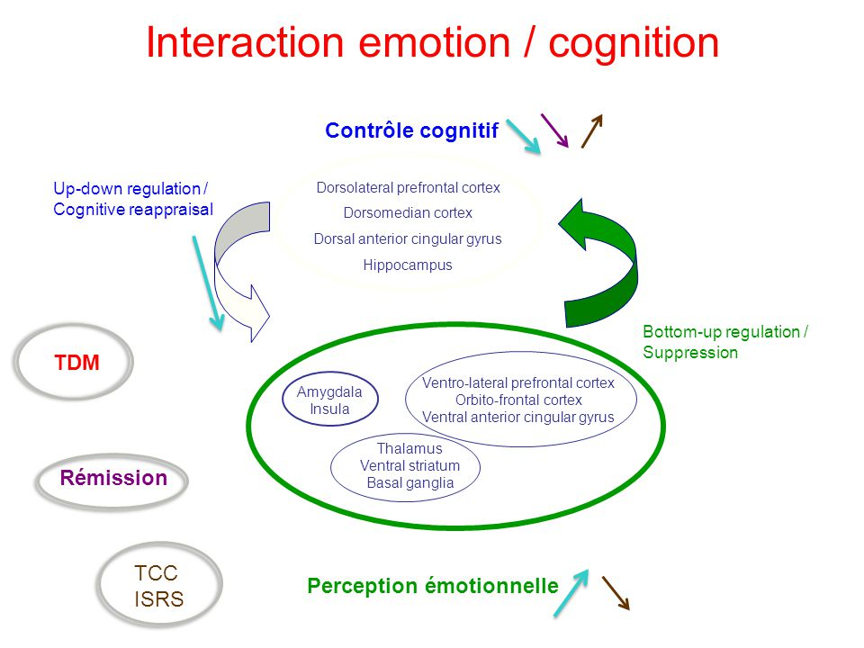 Interaction emotion / cognition