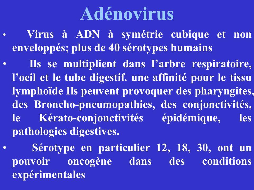 Adénovirus Virus à ADN à symétrie cubique et non enveloppés; plus de 40 sérotypes humains.