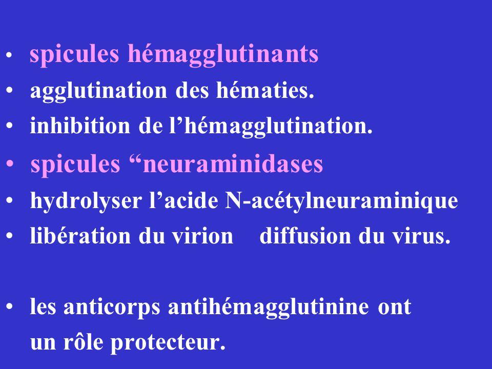 spicules neuraminidases
