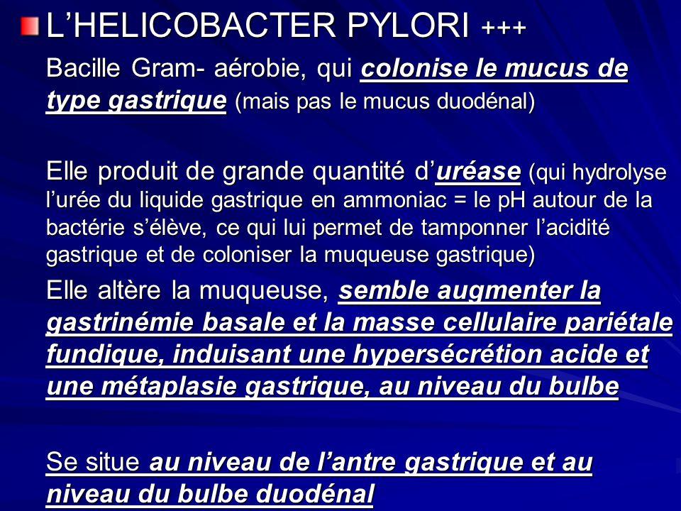 L'HELICOBACTER PYLORI +++