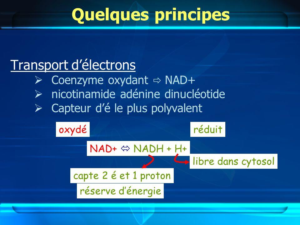Quelques principes Transport d'électrons Coenzyme oxydant  NAD+
