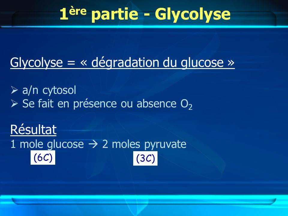 1ère partie - Glycolyse Glycolyse = « dégradation du glucose »