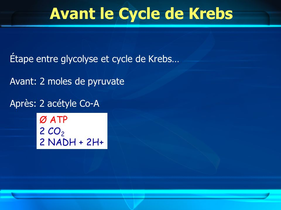Avant le Cycle de Krebs Étape entre glycolyse et cycle de Krebs…