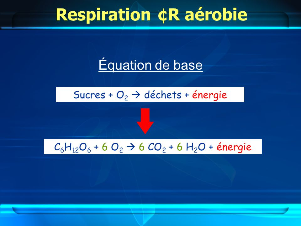 Respiration ¢R aérobie